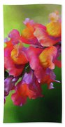 Colorful Snapdragon Beach Towel