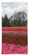 Colorful Tulips Blooming At Tulip Festival Beach Towel