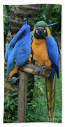Colourful Macaw Pohakumoa Maui Hawaii Beach Towel