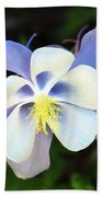 Columbine Colorado State Flower Beach Towel