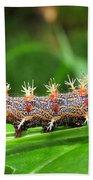 Comma Caterpillar Beach Towel