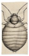 Common Bedbug, Cimex Lectularius Beach Towel