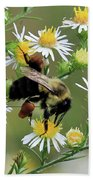 Common Eastern Bumblebee  Beach Towel
