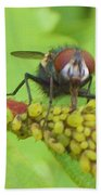 Common Fly Licking Up Aphid Nectar     May         Indiana    Beach Towel