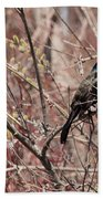 Common Grackle In Spring Beach Towel