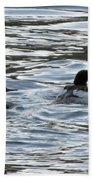 Common Merganzer Pair Beach Towel
