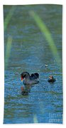 Common Moorhen And Her Baby Beach Towel