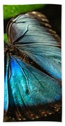 Common Morpho Blue Butterfly Beach Towel