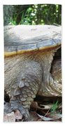 Common Snapping Turtle Beach Towel