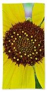 Common Sunflower In Northwest North Dakota Beach Towel