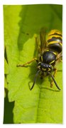 Common Wasp Beach Towel