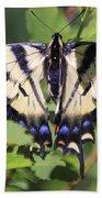 Common Yellow Swallowtail Beach Sheet