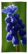 Compact Grape-hyacinth Beach Towel