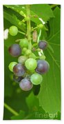 Concord Grapes On The Vine Beach Towel
