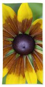 Coneflower - New England Wild Flower Beach Towel