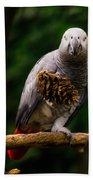 Congo African Grey Parrot Beach Towel