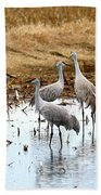 Congregating Sandhill Cranes Beach Towel