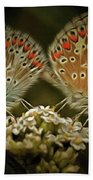 Contact - Detail Of The Butterflies Beach Towel