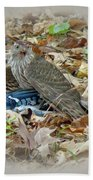Cooper's Hawk - Accipiter Cooperii - With Blue Jay Beach Towel