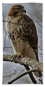 Cooper's Hawk 2 Beach Towel