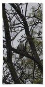 Cooper's Hawk Perched In Tree Beach Towel