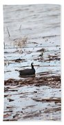Coot In The Weeds Beach Towel