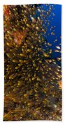 Coral Reef And Diver  Beach Towel