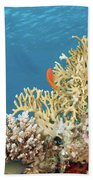 Coral Reef Eco System Beach Towel