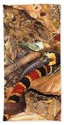 Coral Snake Snack Beach Towel