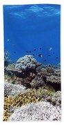 Corals Garden Beach Towel