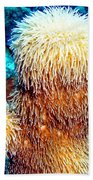Corky Sea Finger Coral - The Muppet Of The Deep Beach Towel