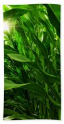 Corn Field Beach Towel by Carlos Caetano