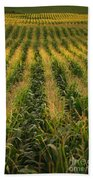 Corn Field Beach Towel