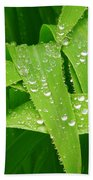 Corn Leaves After The Rain Beach Towel