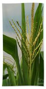 Corn Stalk Beach Towel