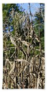 Corn Stalks Drying Beach Towel