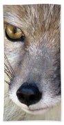 Corsac Fox- Vulpes Corsac 02 Beach Towel