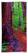 Cosmic Redwood Trail On Mt Tamalpais Beach Towel