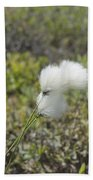 Cotton Grass -eriophorum Virginicum- Beach Towel