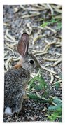 Cottontail Rabbit 4320-080917-1 Beach Towel