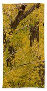 Cottonwood Fall Foliage Colors Beach Towel