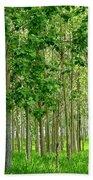 Cottonwood Grove Beach Towel by Will Borden