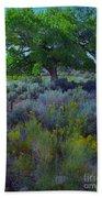 Cottonwood Tree In Old Field Beach Towel