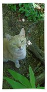 Cougar In The Woods Beach Towel
