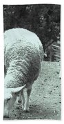 Counting Sheep Beach Sheet