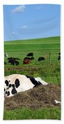 Countryside Cows Beach Towel