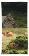 Cow Family Pastoral Beach Towel