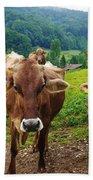 Cow Gazing  Beach Towel