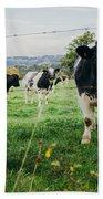 Cow Herd Beach Towel