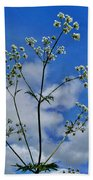 Cow Parsley Blossoms Beach Towel